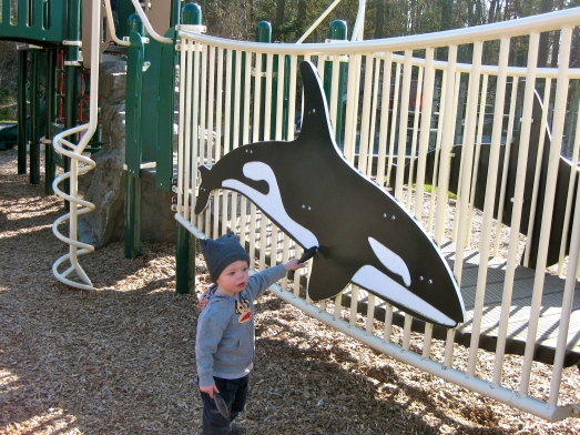 Showing his beloved orca and dolphin a bigger orca.